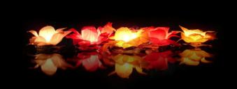 Waterlelie kaarsen